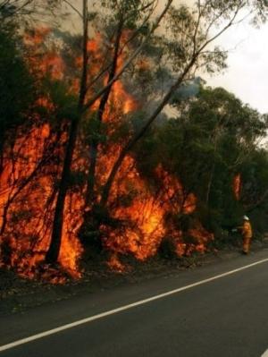 bushfires2