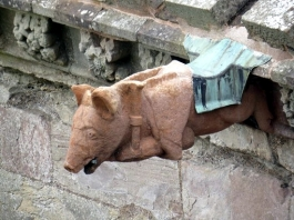 Melrose Pig1